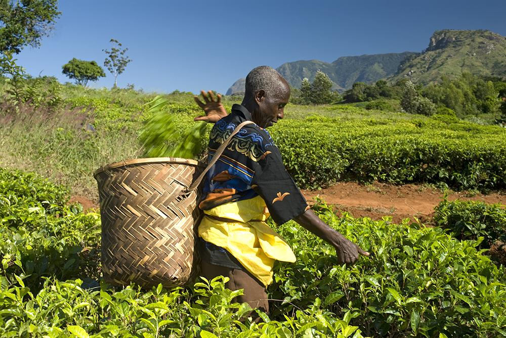 "Какво е ""Fair Trade""?"