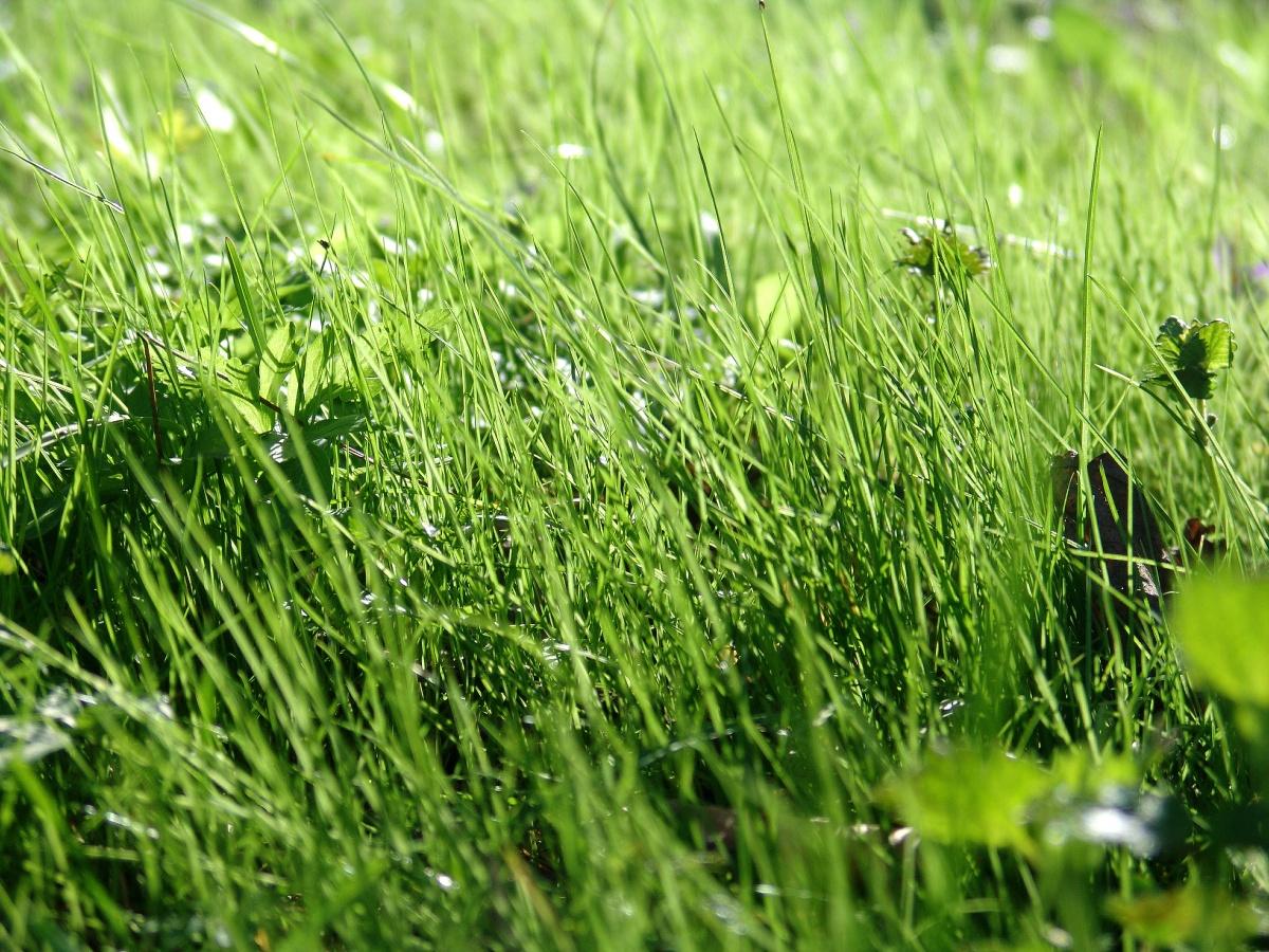 Да посадим трева