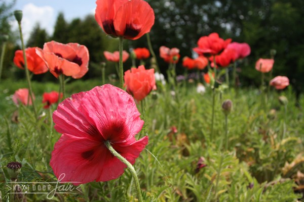 """Разсадник """"Зелена Пролет"""" – за вашата колекция от билки, подправки и цветя"""
