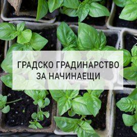 Работилница Градско Градинарство за начинаещи